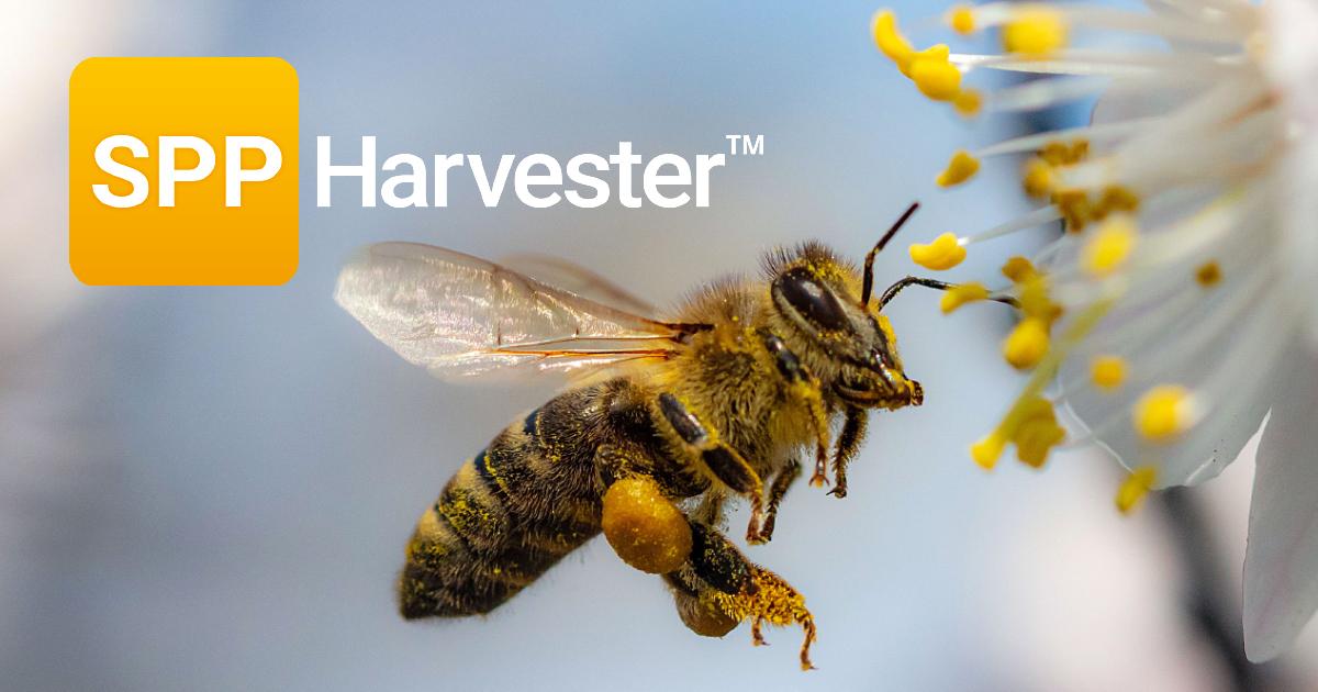 SPP Harvester Bee